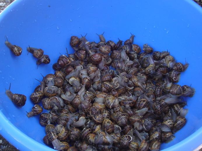 Escargots via algeriemesracines.com