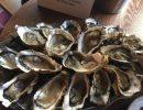 Accords entre huîtres et muscadets nobles d'Olivier Poussier avec « Les bêtes curieuses », crus communaux bien élevés